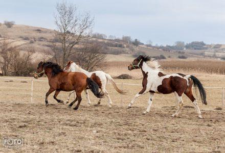 Zdjęcia komercyjne Rymanów - stadnina koni