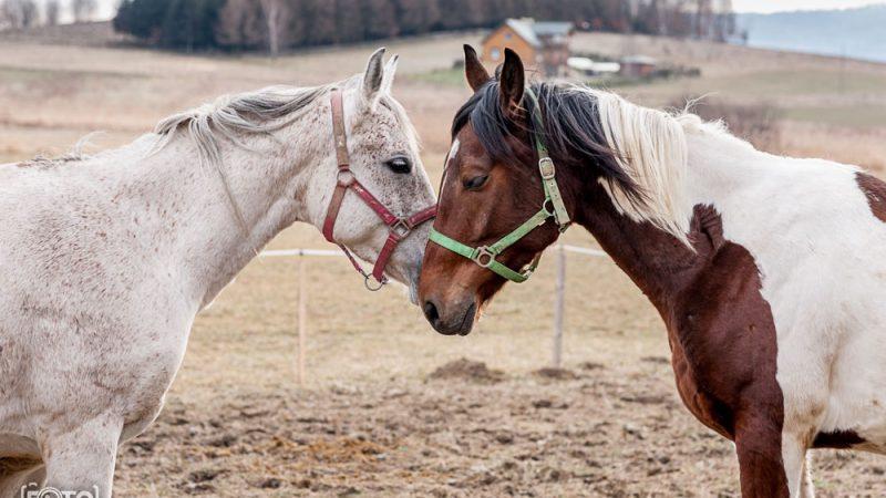 Fotosesja dla stadniny koni – Ladzin k. Rymanowa